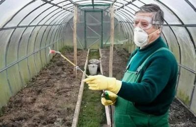 обработка теплицы весной от вредителей