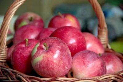 слава победителю сорт яблок