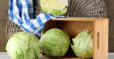 как хранить капусту в квартире