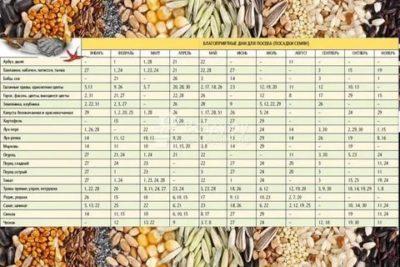 сажаем перец на рассаду по лунному календарю