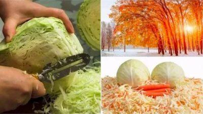 когда в ноябре лучше солить капусту