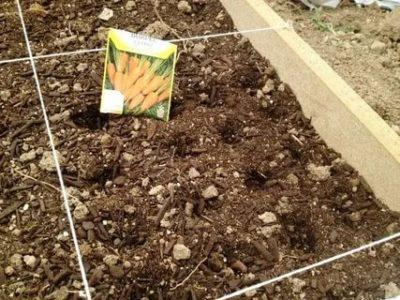 способы посева моркови
