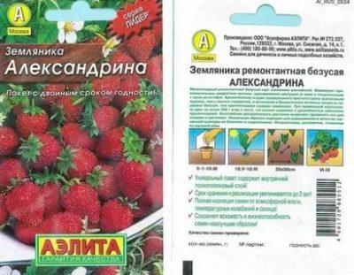 земляника александрина выращивание из семян