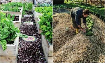 что посеять чтобы не росли сорняки